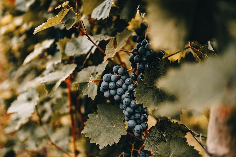 Cochem Weinfest Weinberge