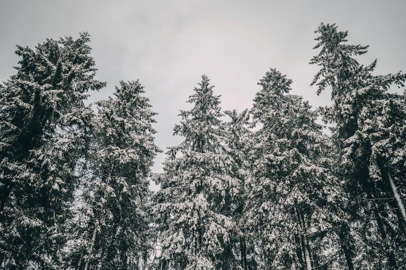 Rothaarsteig im Winter