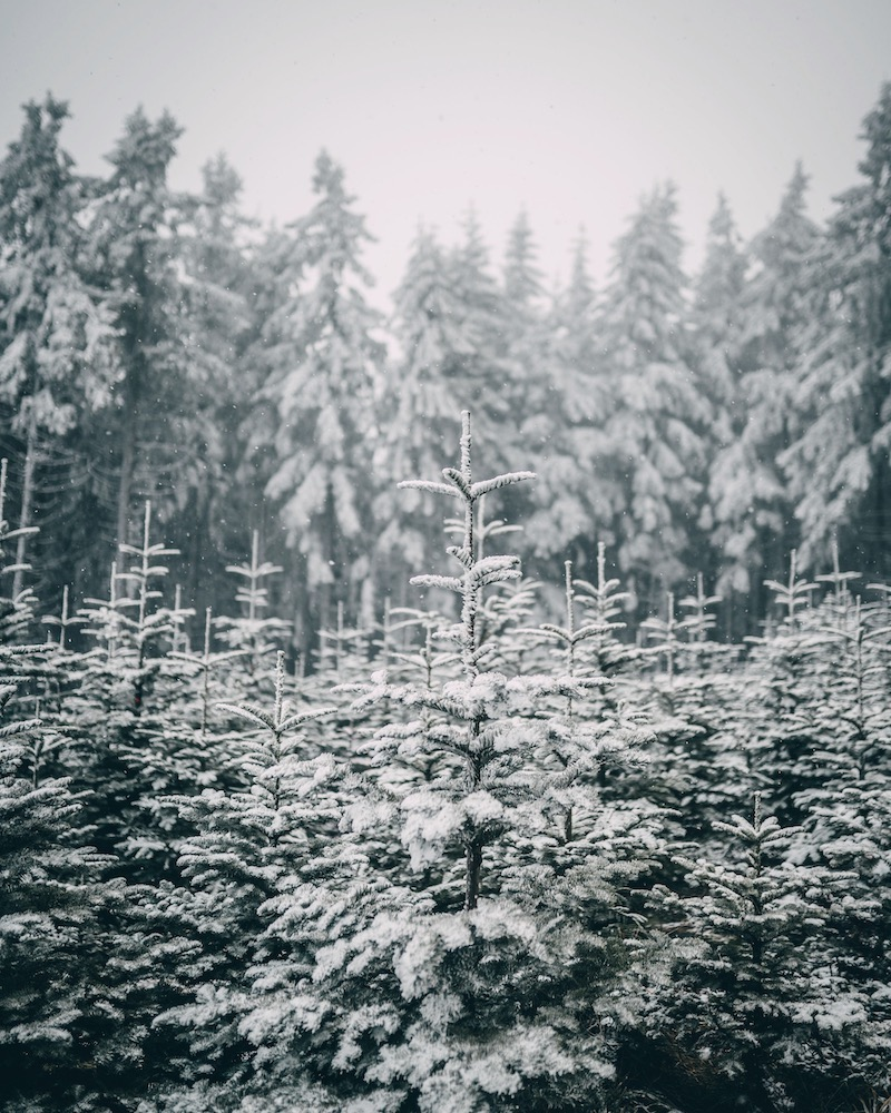 Sauerland Winter wandern
