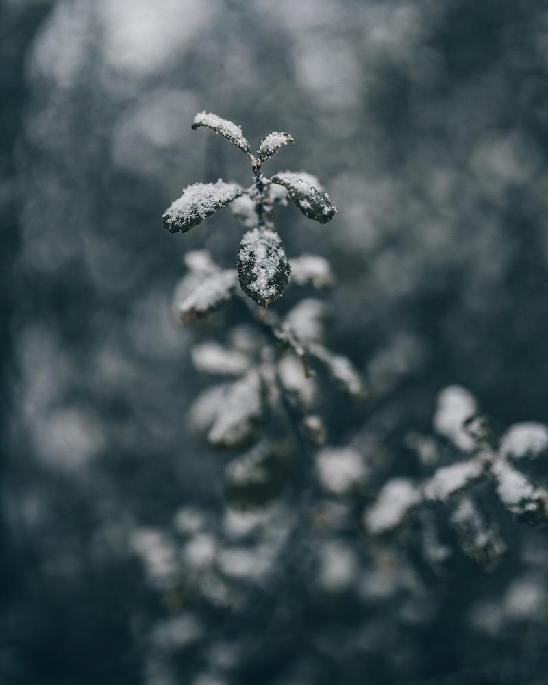 Schnee in Deutschland November