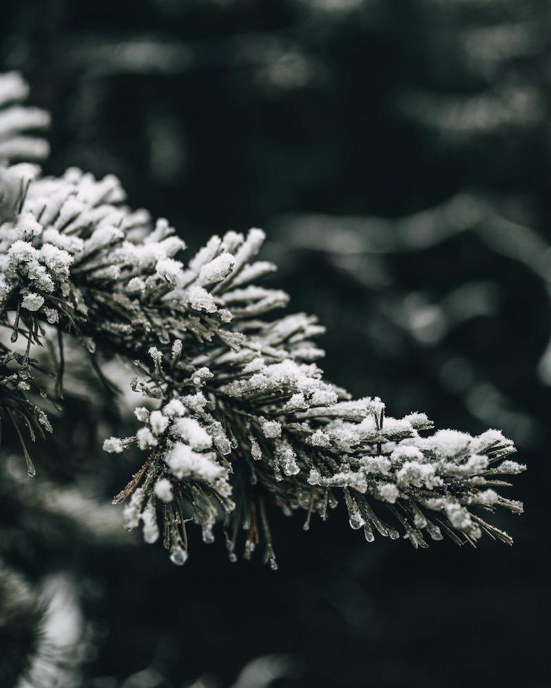 Tannenspitzen Schnee Sauerland