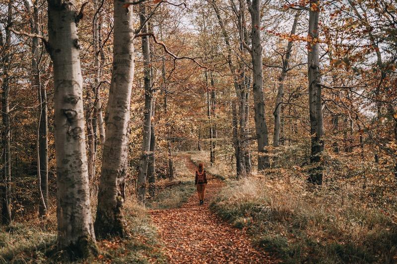 Urlaub im Harz Wanderung Rotestein