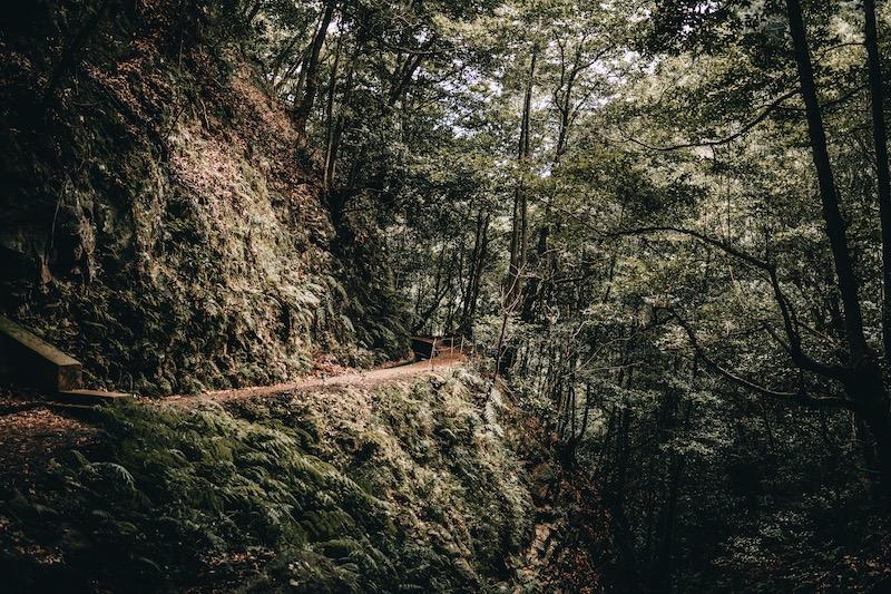 Madeira Urlaub Levada Wanderung
