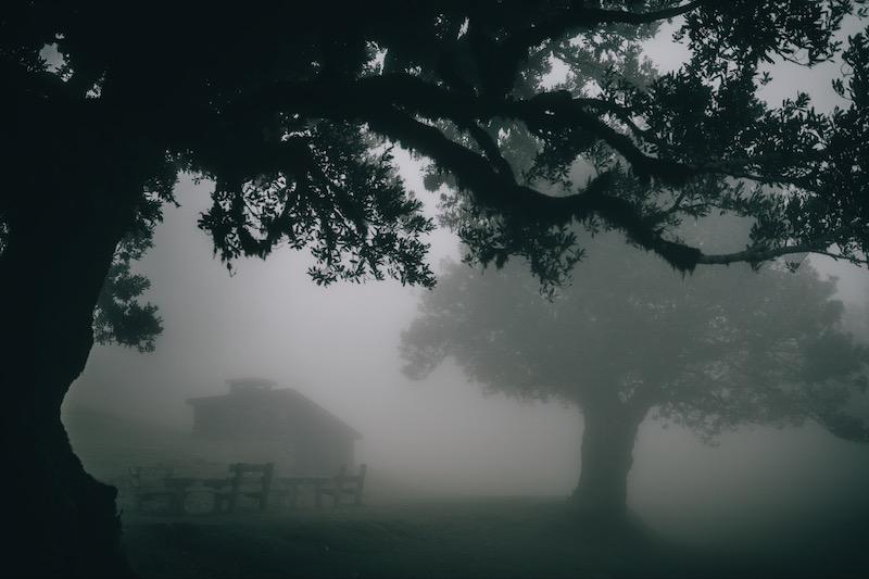 Madeira Urlaub Nebelwald Fanal