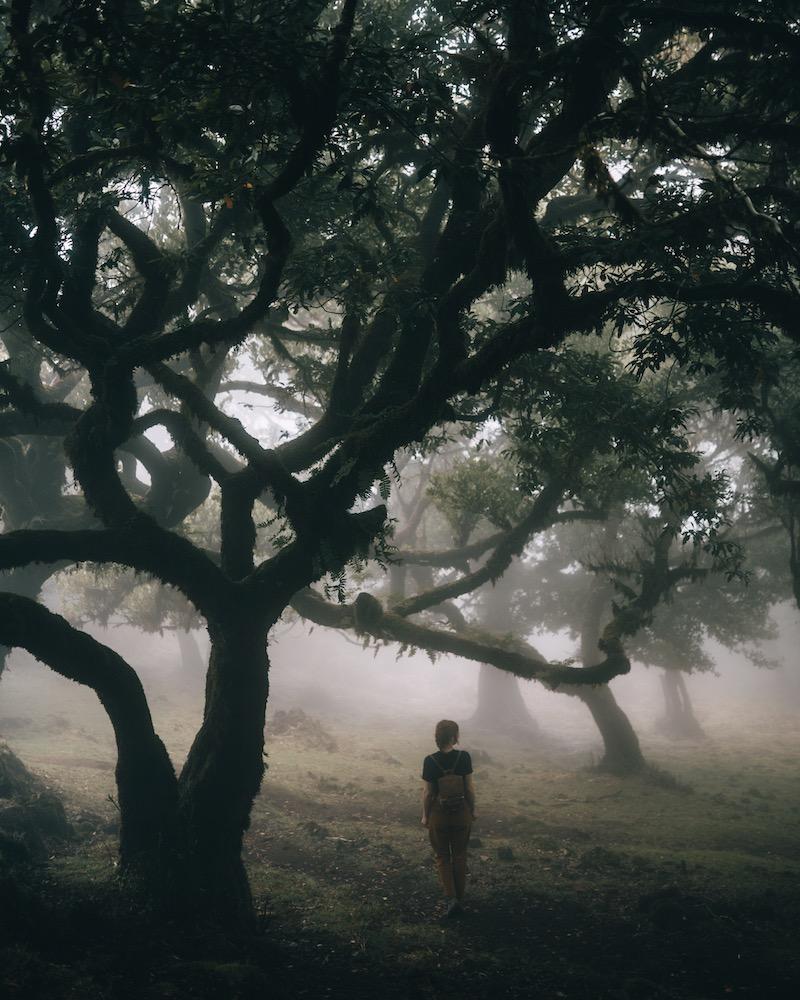 Madeira Urlaub Nebelwald Paul da Serra