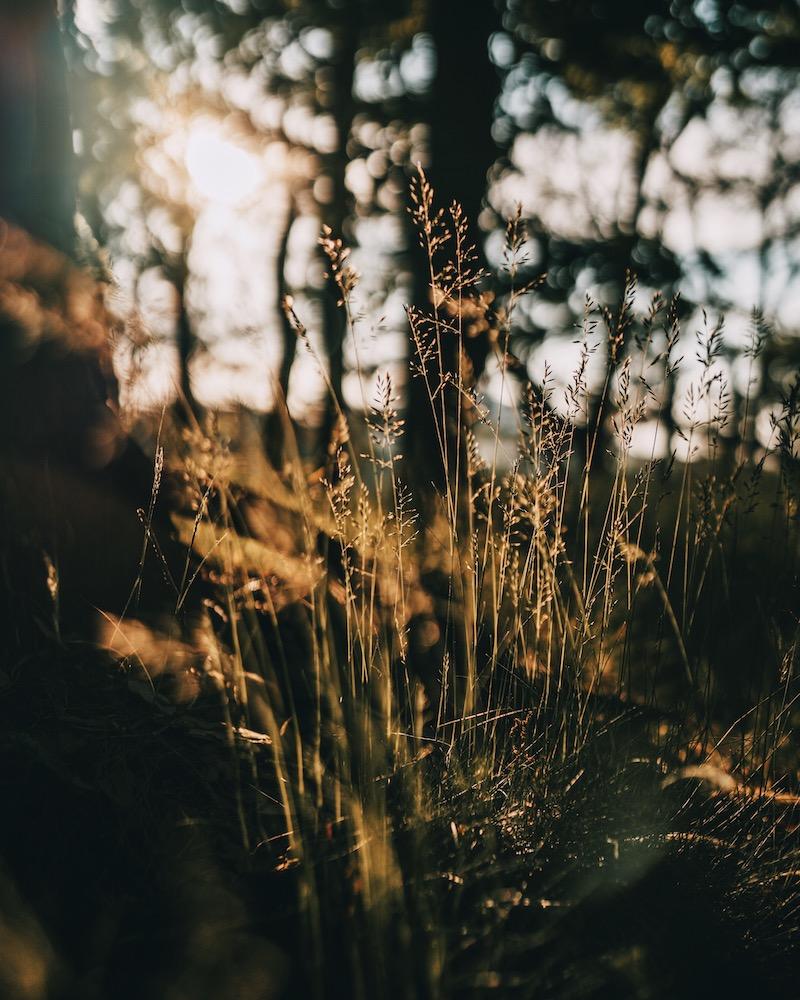 Eifel Ettringen Natur
