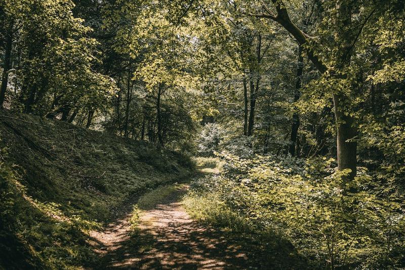 Rundweg 2 Wandern im Ahrtal