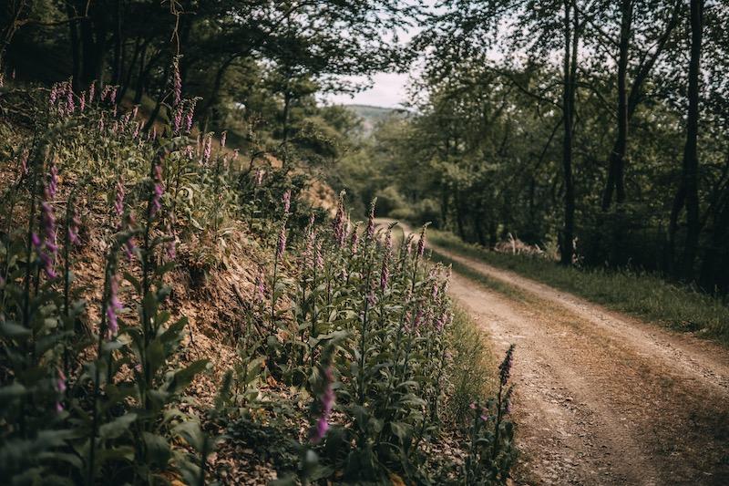 Wandern im Ahrtal Aufstieg Steinerberg