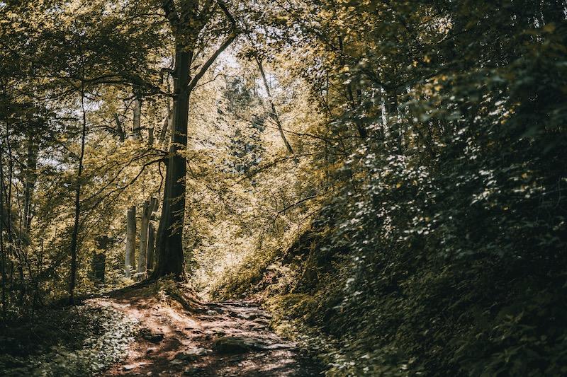 Wanderung Monschau