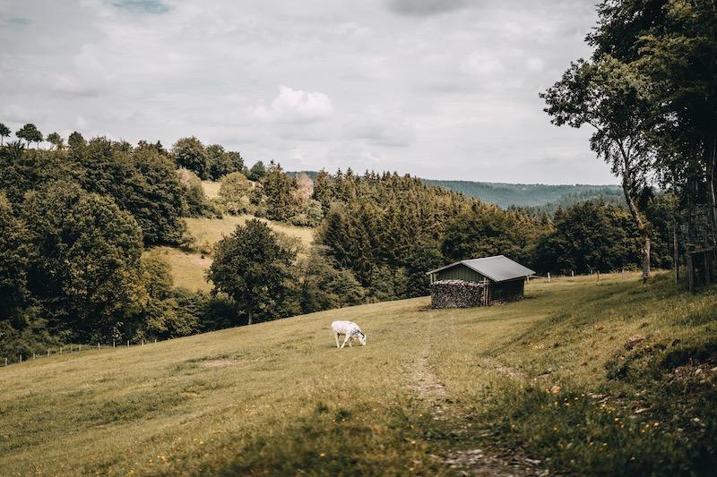 Heckenweg Höfen wandern in der Eifel