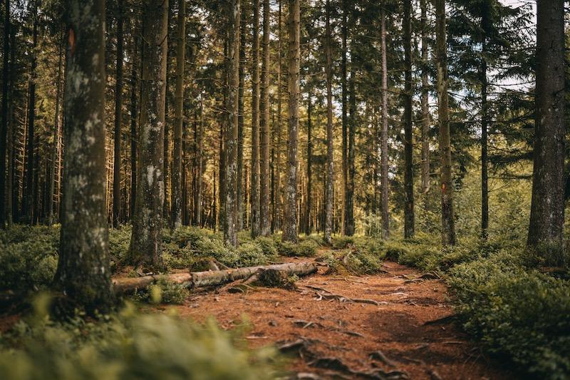 Hohes Venn Wandern in der Eifel