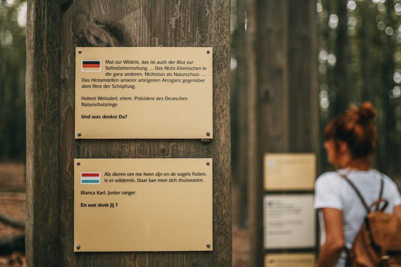 Wandern in der Eifel Nationalpark