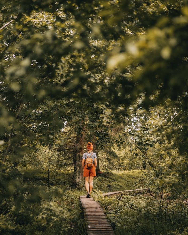 Wandern in der Eifel Naturpark Hohes Venn