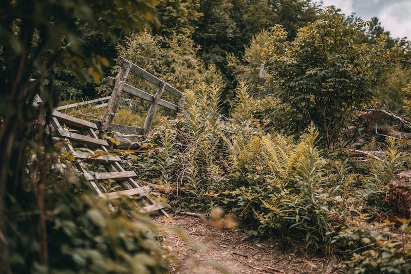 Wandern in der Eifel Wilder Weg