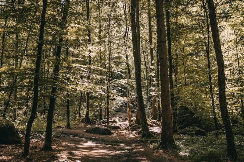 Wanderung Camping in der Eifel