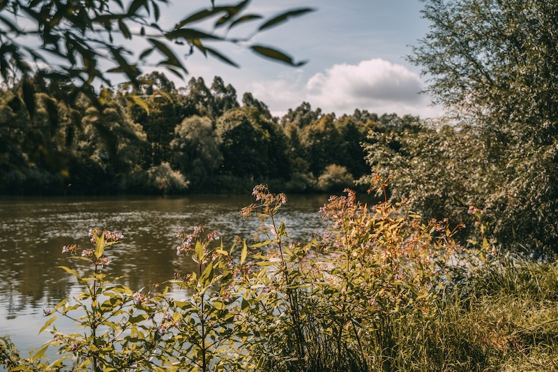 Donauwald Wanderweg Donau