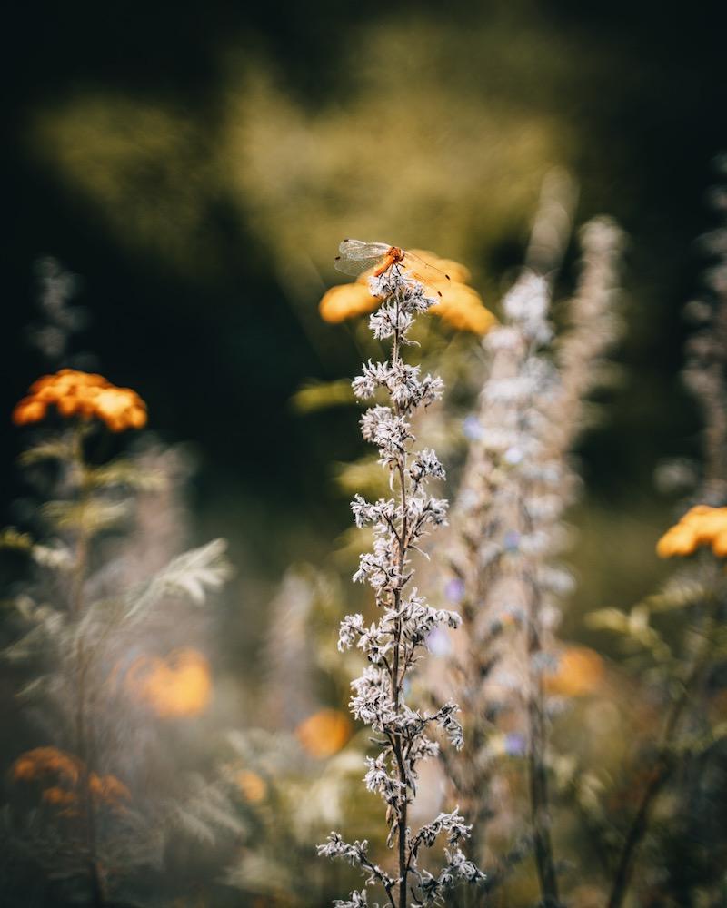 Donauwald Wanderweg Libelle