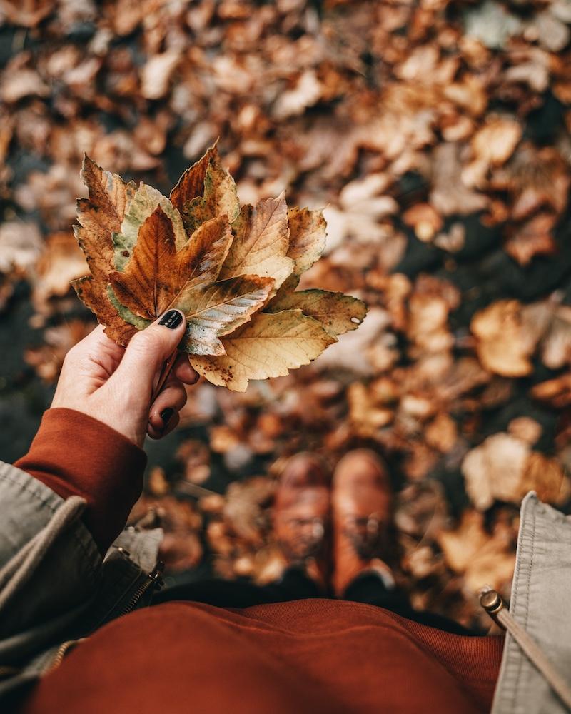 Herbst 2020 Blätter