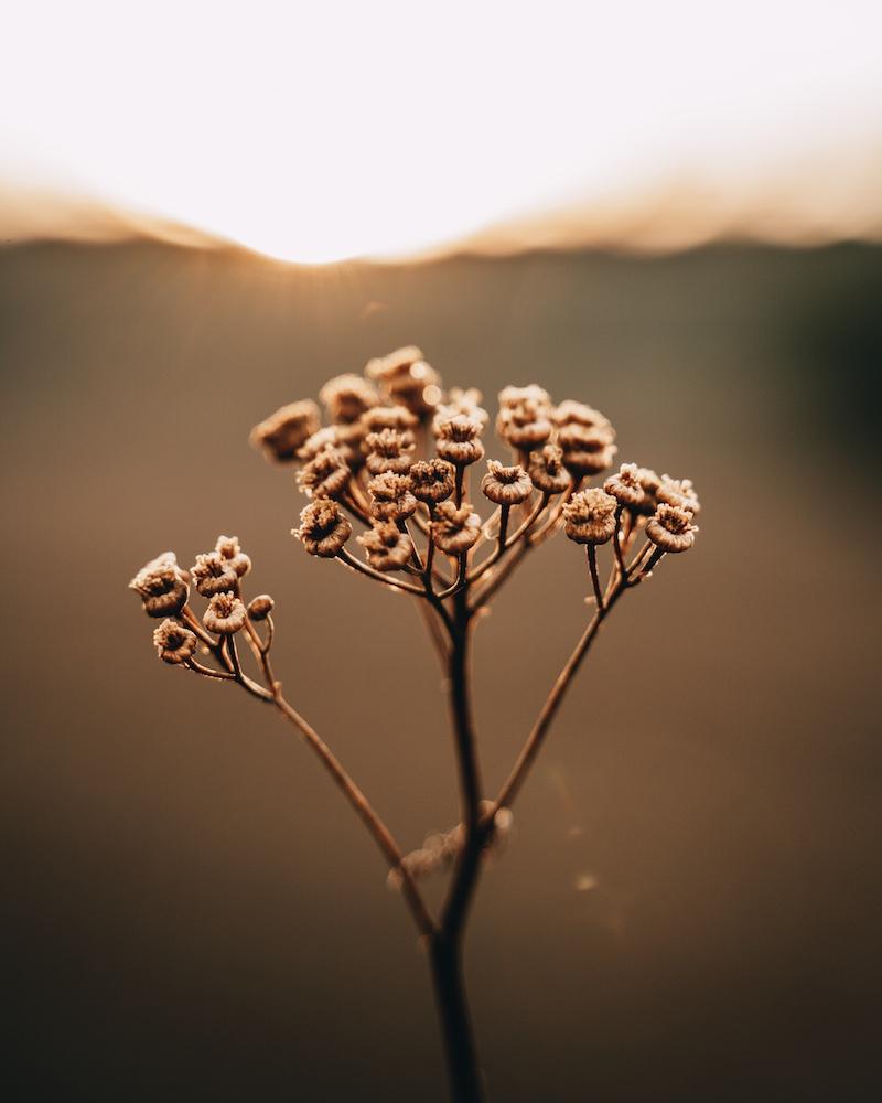 Herbstanfang Blume