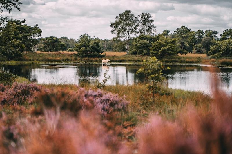 Oisterwijk Brabant Heide