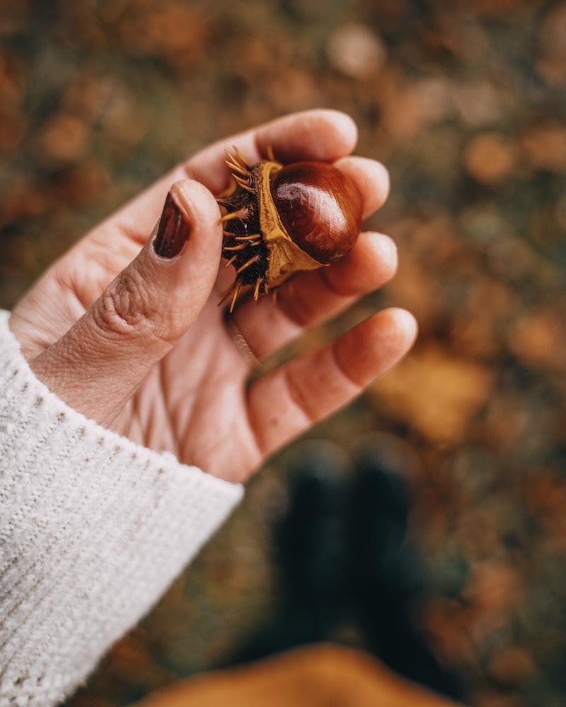 Kastanien Herbst 2020