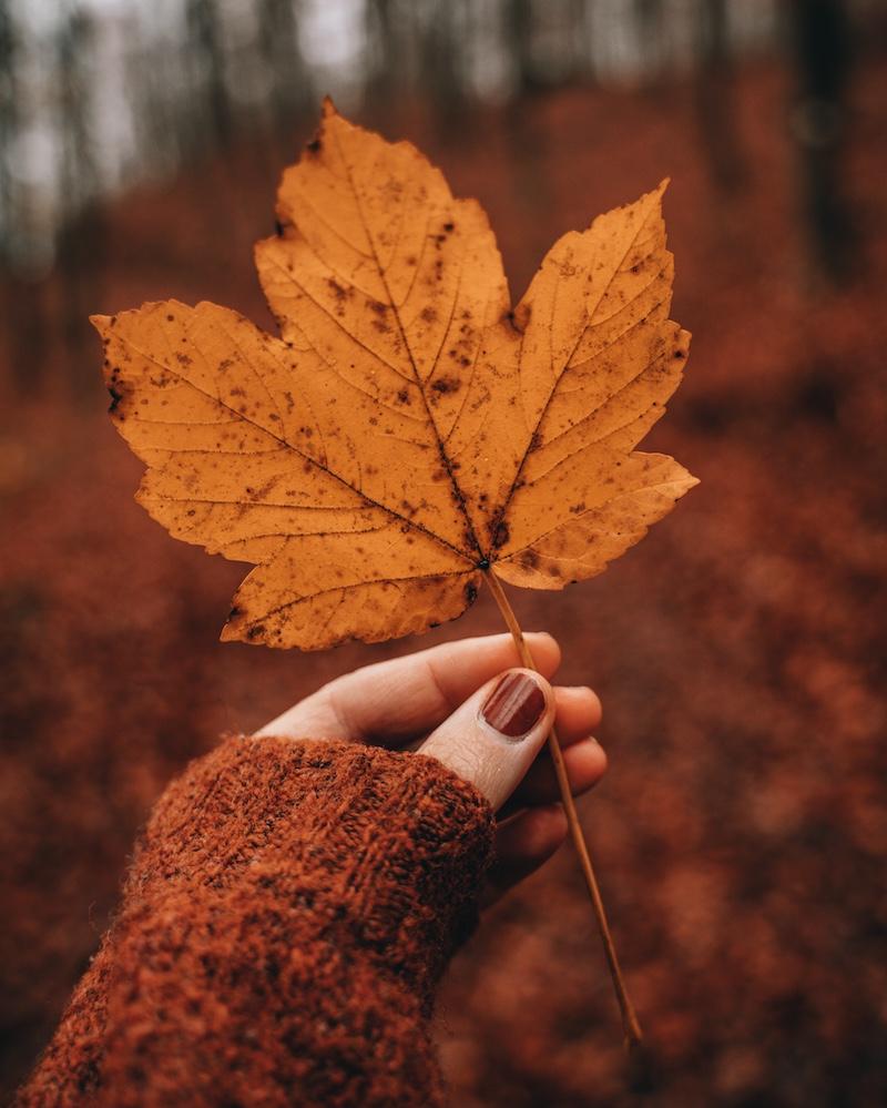 Herbstlaub November