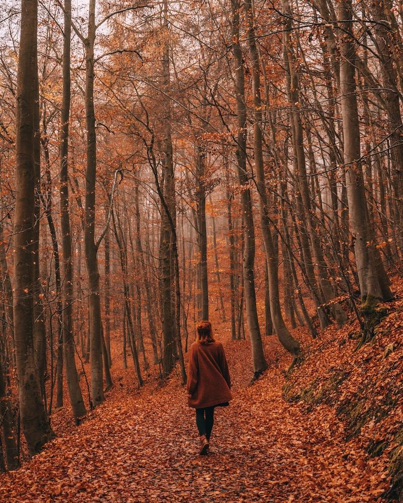 Herbstwald November 2020