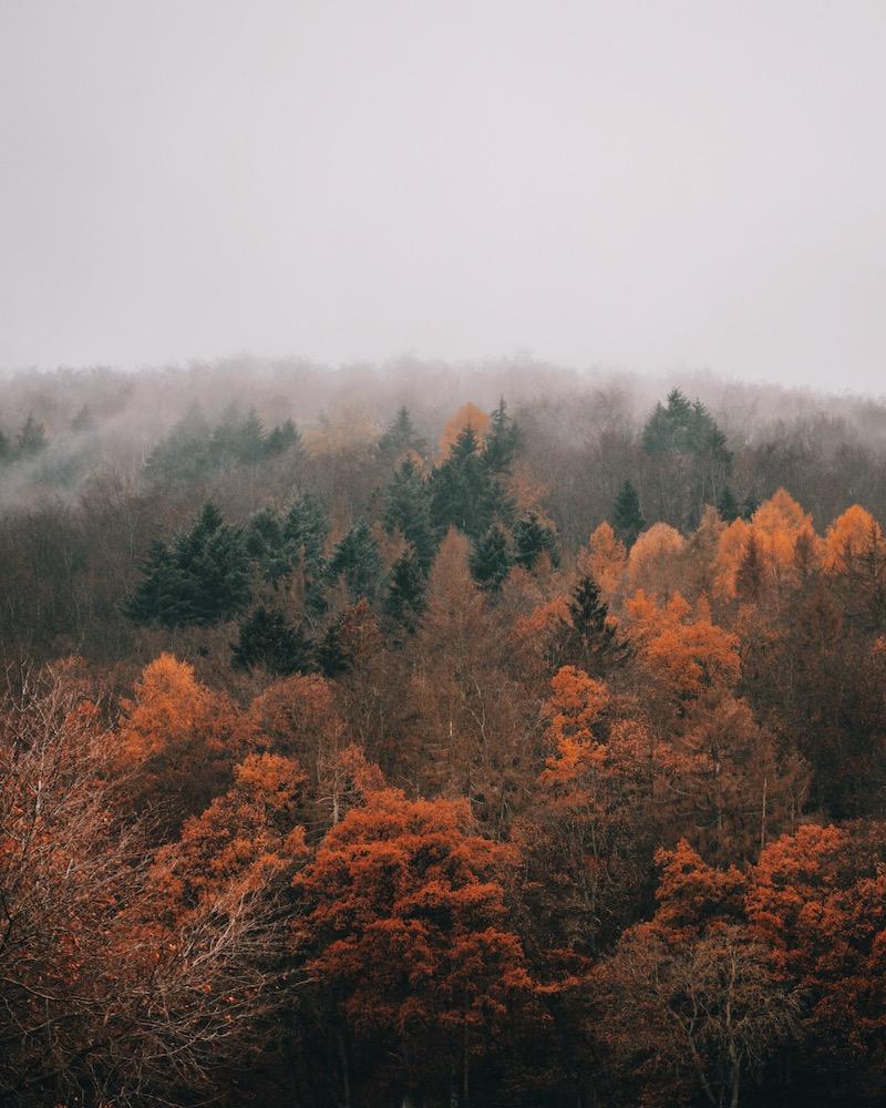 Novembernebel Wald
