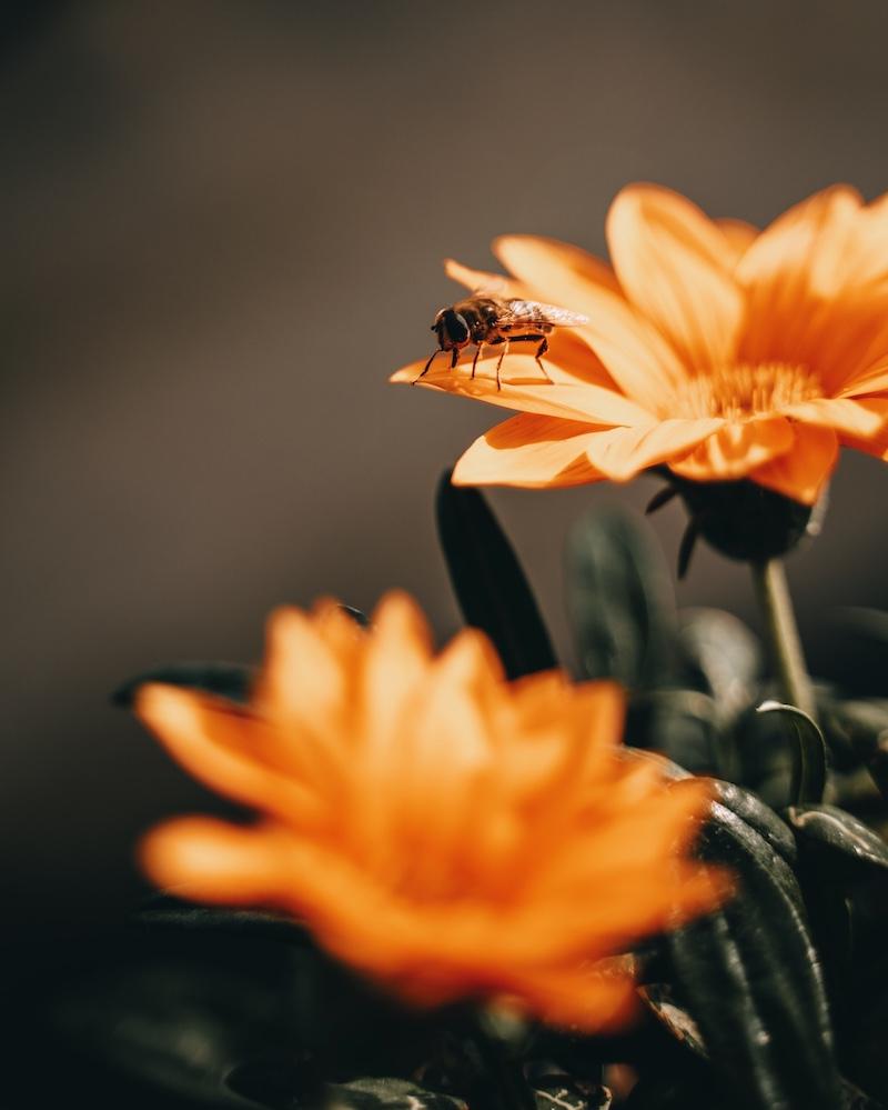 Bienenwiese Dachterrasse