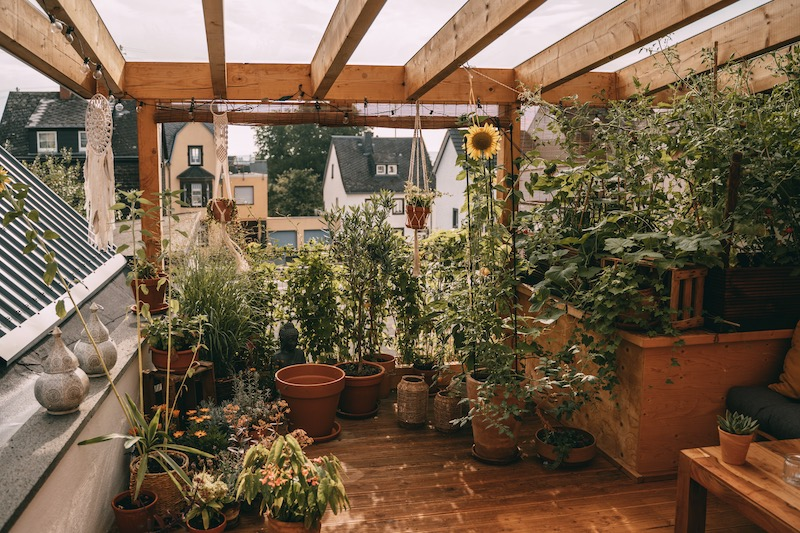 Pflanzen Dachterrasse