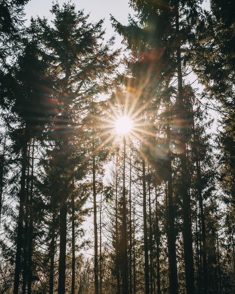 Wald wandern Februar 2021