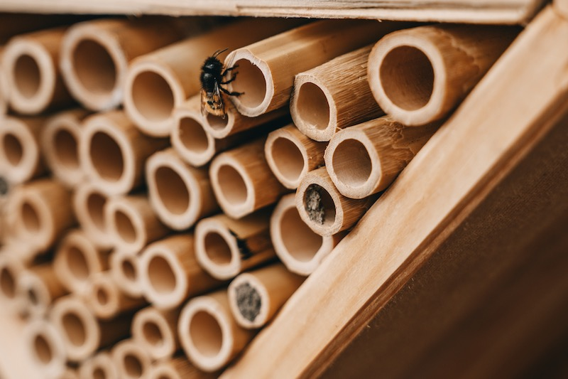Bienensterben Bienenhotel