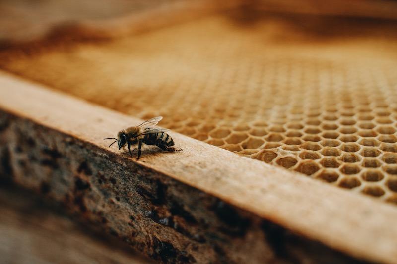 Bienensterben Bienenschutz