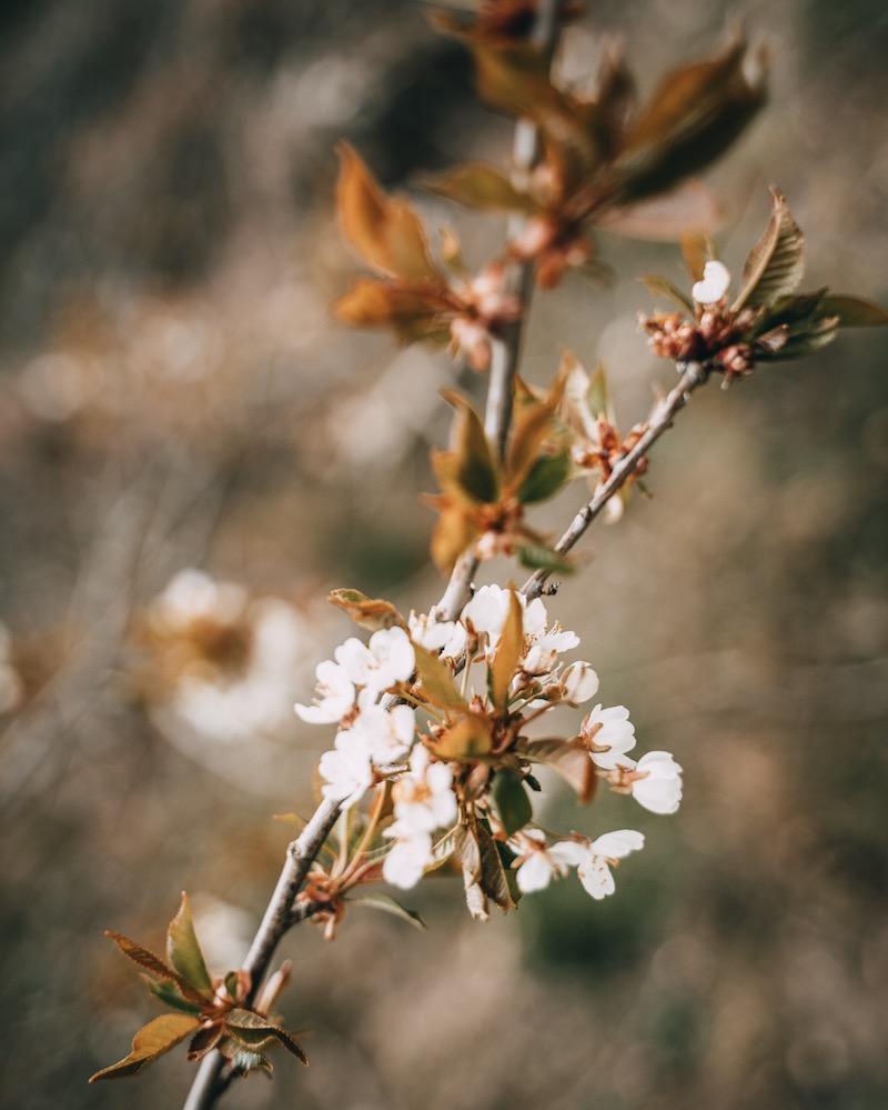 Frühling Pommerbachtal