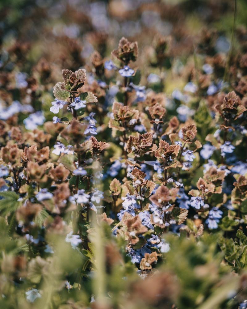 Pommerbachtal Frühlingsblumen
