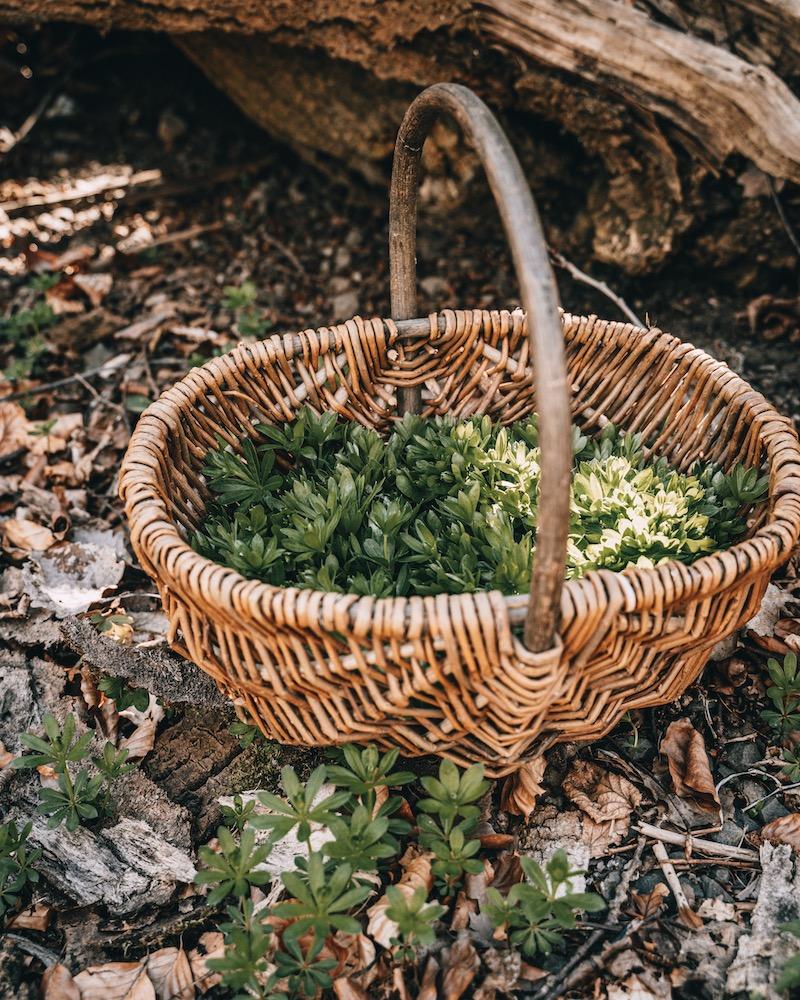Waldmeister: Frühlingsgenuss aus der Natur mit Maibowle & Sirup