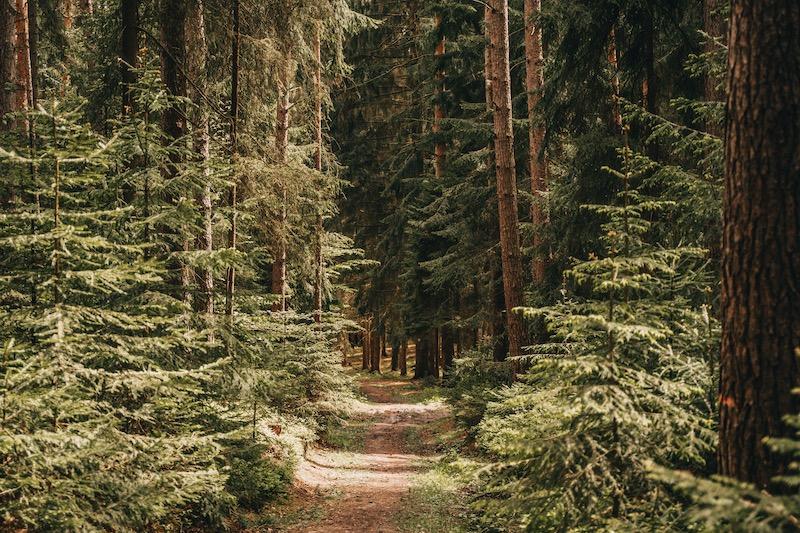 Thüringen Goethe Erlebnisweg