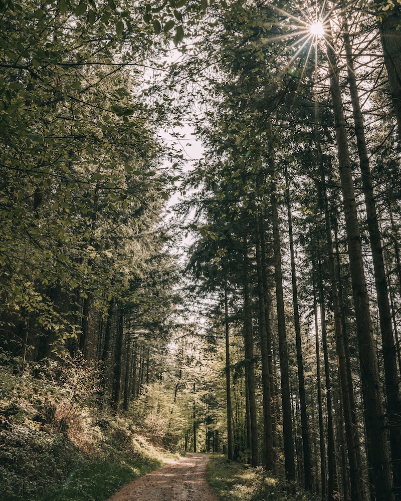 Wandern an der Mosel Karden Pommern