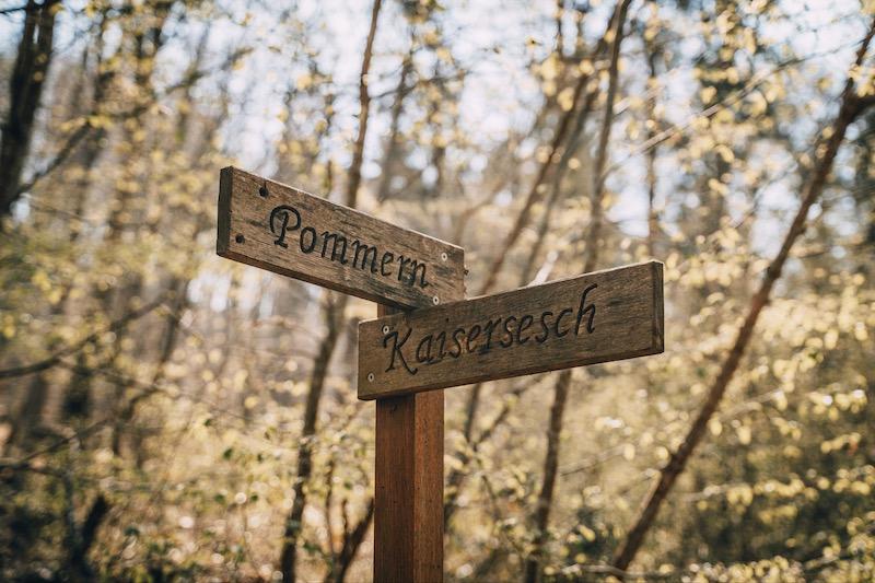 Wandern an der Mosel Pommerbachtal