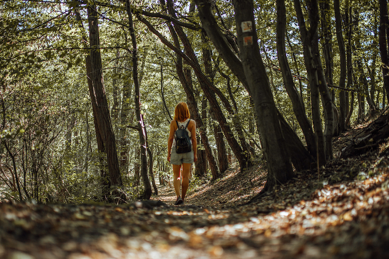Wanderungen an der Mosel Traumpfad Eltzer Burgpanorama