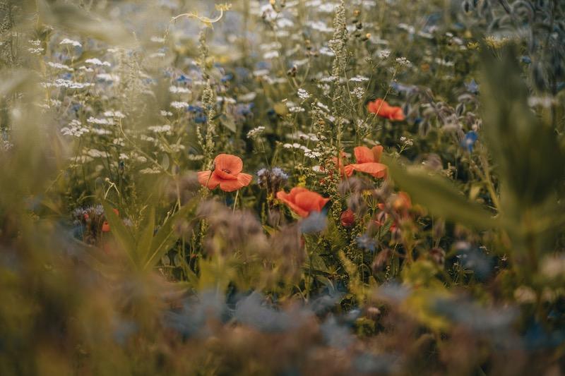 Remstal Weiherwiesenweg Blumenwiese