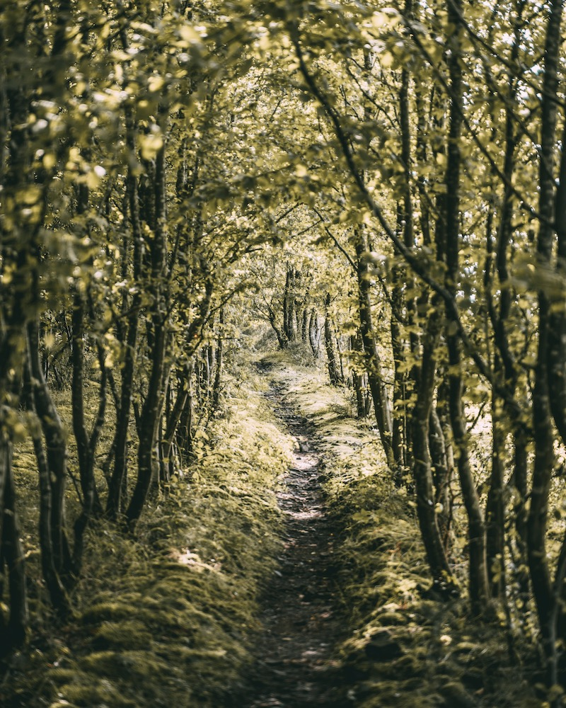 Moselschieferstraße wandern