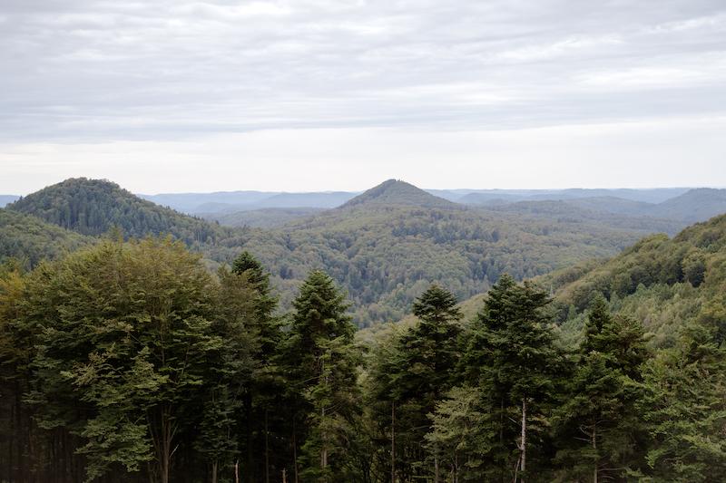 Pfälzer Wald Aussichtspunkt