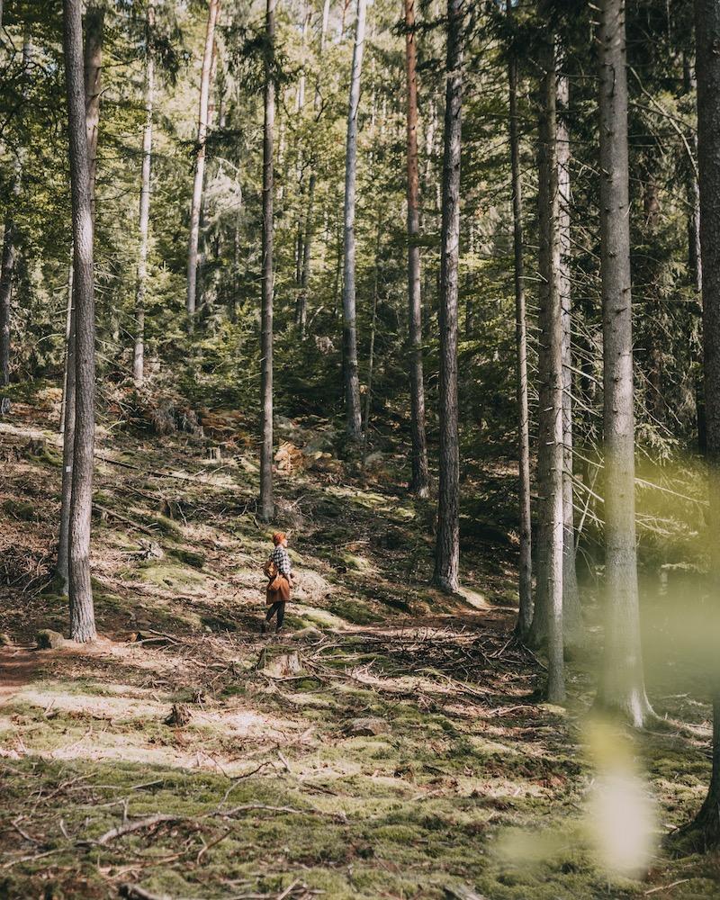 Pfälzer Wald wandern