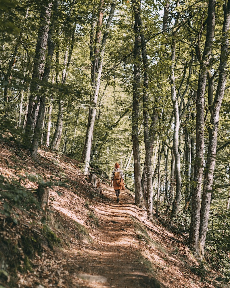 Teufelstischtour Pfälzer Wald