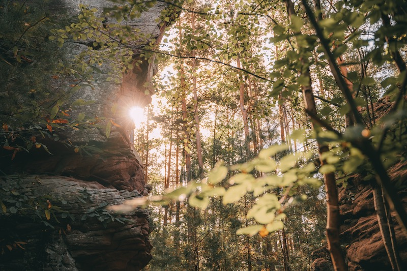 Wandern im Pfälzer Wald